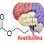 acetilcolina-acetilcolina