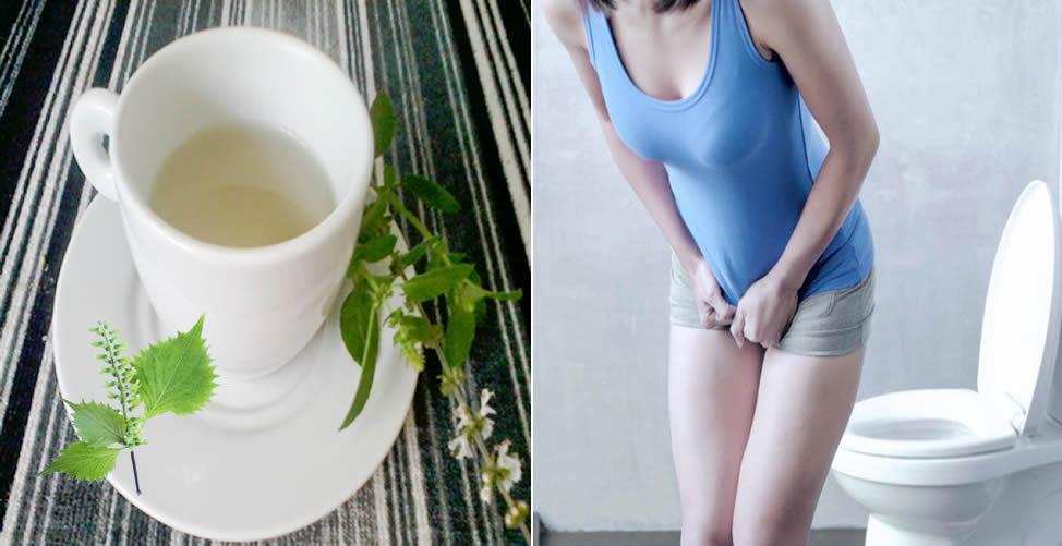 Remédio Caseiro Para Infecção Urinária - Manjericão